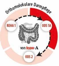 Phase 2 unserer orthomolekularen Darmpflege